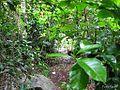 Sendero entre los arbustos - panoramio.jpg