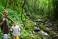 Seneca-creek-wilderness - West Virginia - ForestWander.jpg