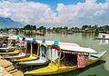 Shikara Boats - Lifestyle in Dal Lake, Srinagar, Kashmir, India.jpg