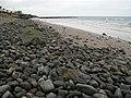 Shoreline north of Ballywalter - geograph.org.uk - 1182932.jpg