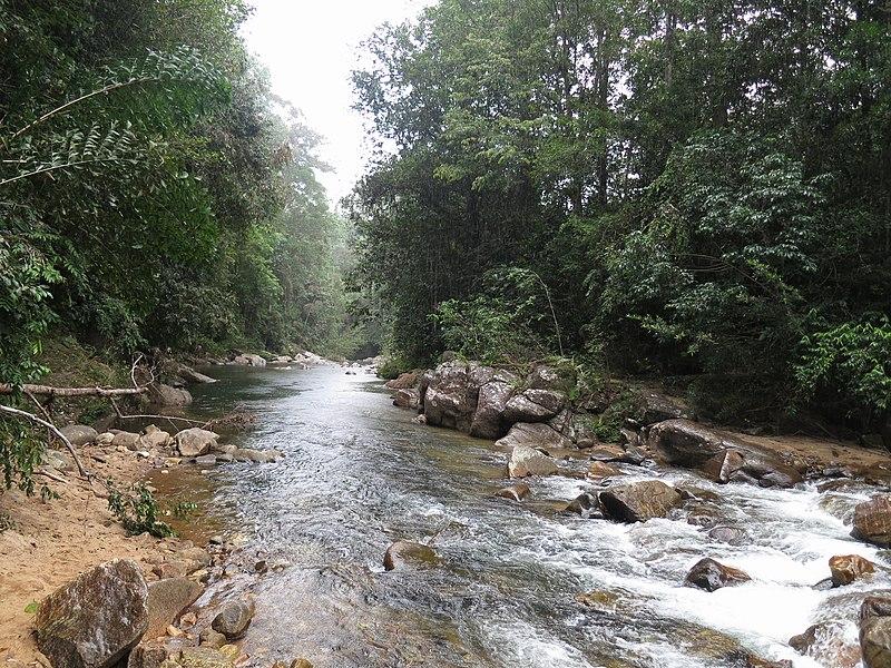 File:Sinharaja Forest waterfall4.JPG