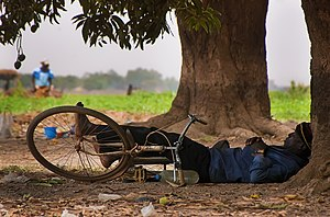Man sleeping siesta under mango trees in Ouagadougou. His wife is working in the background fields.