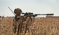 Sniper with 2 Royal Anglian in Afghanistan MOD 45157886.jpg