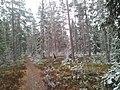 Snow - panoramio (23).jpg