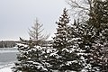 Snow Covered Trees -- Drummond Island during the winter - 49694704201.jpg
