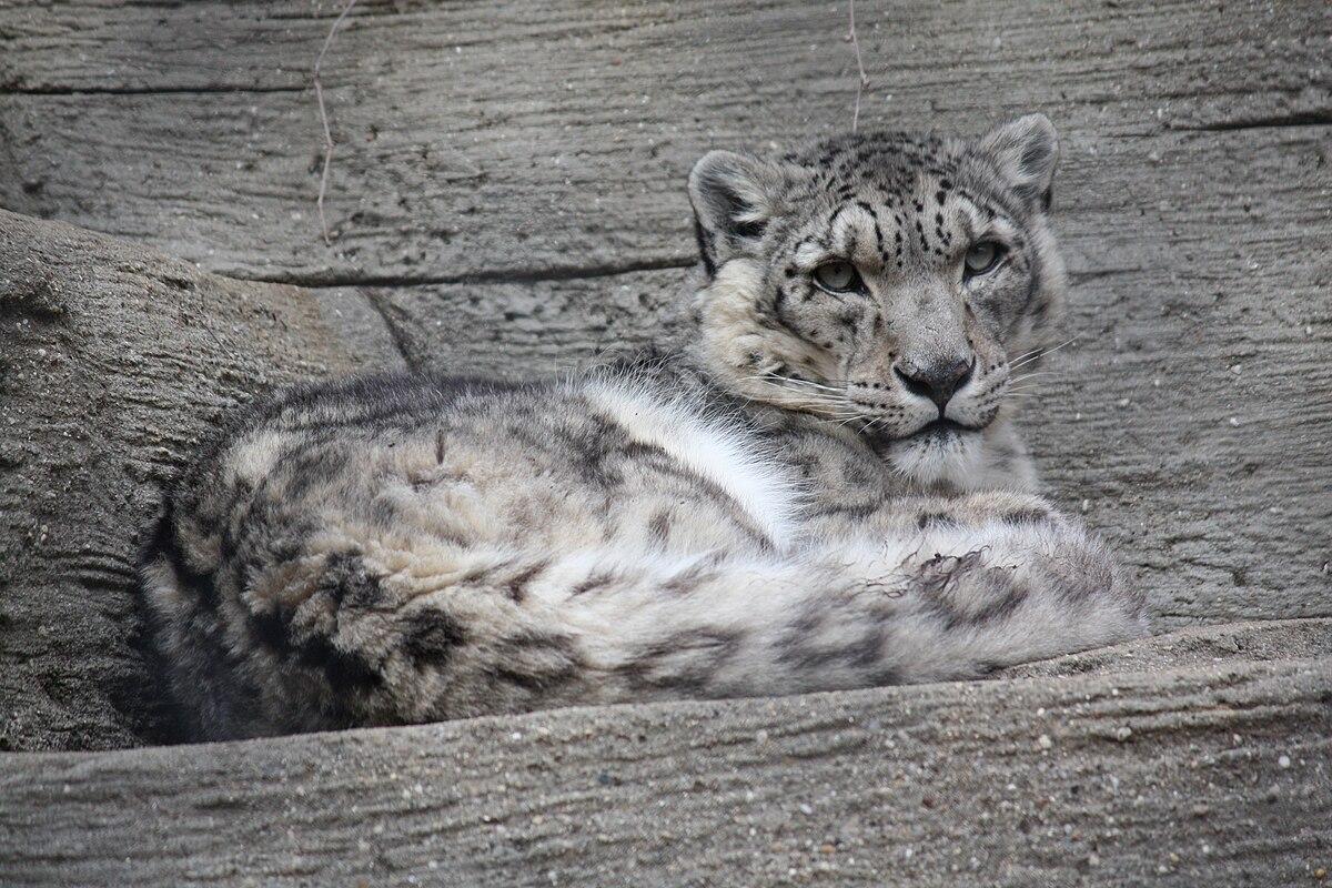 Wildlife of Pakistan - Wikipedia