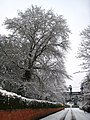 Snow in Belfast (14) - geograph.org.uk - 649530.jpg