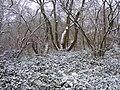Snowy Coppice - geograph.org.uk - 1650751.jpg
