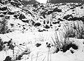 Snowy Etna.jpg