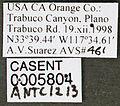 Solenopsis invicta casent0005804 label 1.jpg