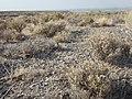 South of Marsing sagebrush steppe (Somer Camp Road area) (9677455554).jpg