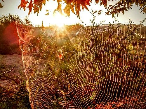 Spiderweb HDR.jpg
