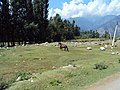 Srinagar - Pahalgam views 14.JPG