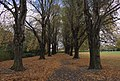 St James Park, Christchurch.jpg