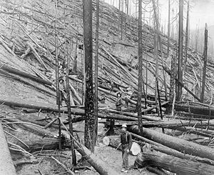 Great Fire of 1910 - Little North Fork of the St. Joe River, Idaho