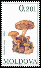 Stamp of Moldova 141 - 2.png