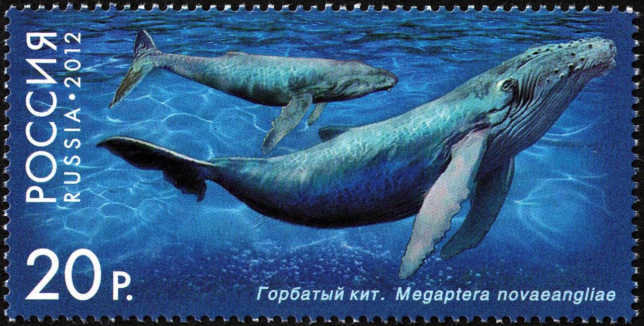 Печатать экономический календарь kirpich prm ru 1280px stamp of russia 2012 no 1557 humpback whale jpg