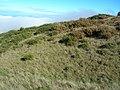 Starr-051122-5256-Ulex europaeus-thick patches-Haleakala Ranch-Maui (24481792789).jpg