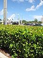 Starr-090922-5201-plant-Chrysobalanus icaco-hedge-Boynton Beach Florida.jpg
