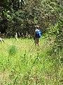 Starr-110609-6107-Strelitzia reginae-abandoned farm with Kim-Shibuya Farm Kula-Maui (24978559232).jpg