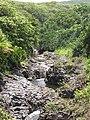 Starr-120606-7040-Terminalia catappa-habit view mauka Seven Sacred Pools-Kipahulu-Maui (25144726835).jpg