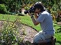 Starr-170224-0935-Brassica rapa var parachinensis-flowering in veggie garden with Sumio photographing-Hawea Pl Olinda-Maui (32567126223).jpg