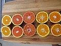 Starr-180917-5497-Citrus sinensis-several varieties ready for juicing Washington Navel Cara Cara Navel Vaniglia sanguinea Temple Tangor Minneolo Tangelo-Hawea Pl Olinda-Maui (45091236554).jpg