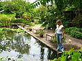 Stellenbosch University Botanical Garden - lily pools.jpg