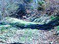 Strážca cesty - panoramio.jpg