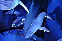Ozeaneum Stralsund Hai