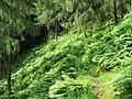 Strathyre Forest - geograph.org.uk - 9869.jpg