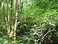 Stream Under Stonehurst Hanger - geograph.org.uk - 242780.jpg