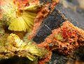 Studtite-Fourmarierite-Uranophane-214966.jpg