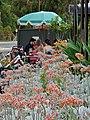 Succulent Cafe (31657804893).jpg