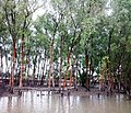 Sundarban (31).jpg