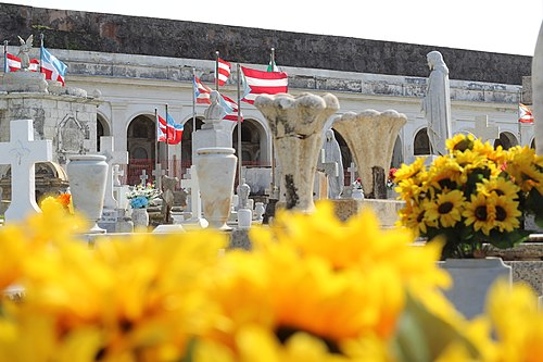 Sunflowers in the Santa María Magdalena de Pazzis Cemetery in Old San Juan, Puerto Rico.jpg