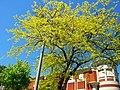Sutton tree and sky 25-05-12..jpg