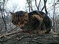Tabby cat, Odessa, 2019 03.jpg