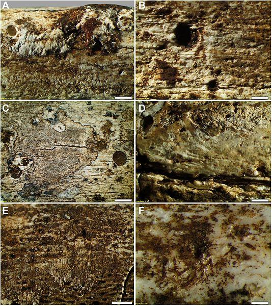 Fósiles de Homo naledi