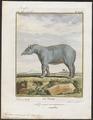 Tapirus americanus - 1700-1880 - Print - Iconographia Zoologica - Special Collections University of Amsterdam - UBA01 IZ22000273.tif