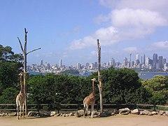 Taroonga Zoo.jpg