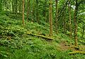 Tarr Steps Woodland 1.jpg