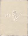Tarsius spectrum - 1700-1880 - Print - Iconographia Zoologica - Special Collections University of Amsterdam - UBA01 IZ19700144r.tif