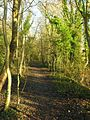 The Jack Mytton Way along a disused railway line - geograph.org.uk - 324193.jpg