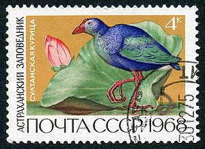 Astrakhan Nature Reserve - Image: The Soviet Union 1968 CPA 3674 stamp (Purple Swamphen and Lotus (Astrakhan Nature Reserve)) cancelled