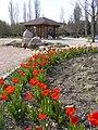 The TNU Botanical Garden in Simferopol, Crimea, Ukraine 48.jpg