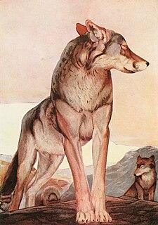 Akela (<i>The Jungle Book</i>) fictional wolf from Kiplings Jungle Book