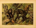 The animal kingdom (Plate I) (6130241952).jpg