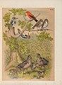 The birds of North America (PL. IX) (6022127217).jpg