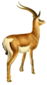 The book of antelopes (1894) Gazella granti (white background).png